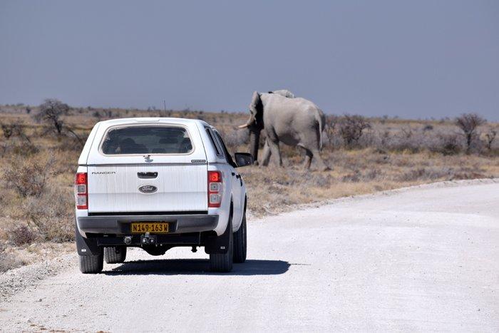 Viaggio in auto in Namibia, Parco nazionale Etosha.
