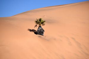 Il Namib Desert, Namibia.
