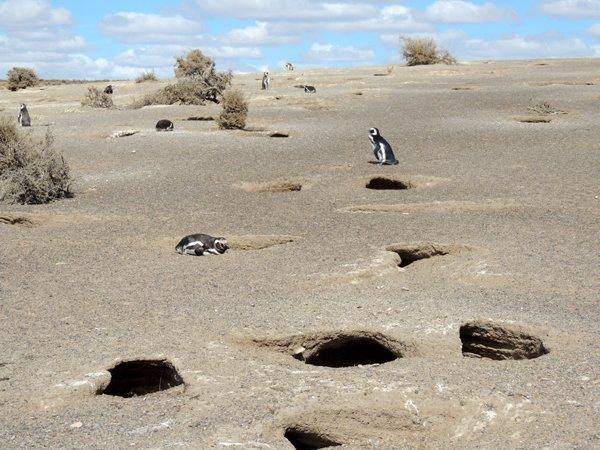 Itinerario di viaggio in Patagonia: la pinguineria di Punta Tombo.