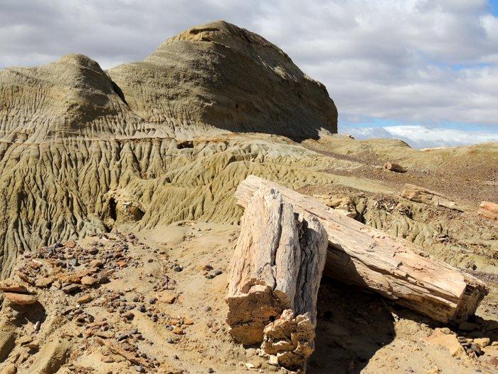 Itinerario di viaggio in Patagonia: il bosco pietrificato.